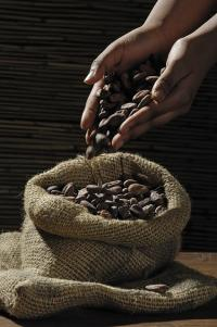 cocoa-beans-200x320_fp